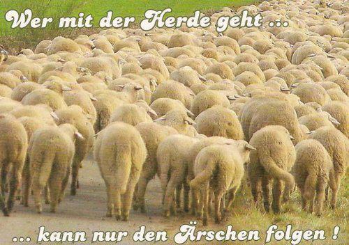 Lebensmotto: Wer mit der Herde geht ...
