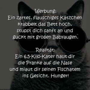 Katzen Lustiger Spruch
