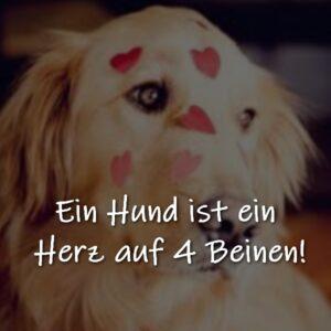 Ein Hund ist ein Herz auf 4 Beinen!