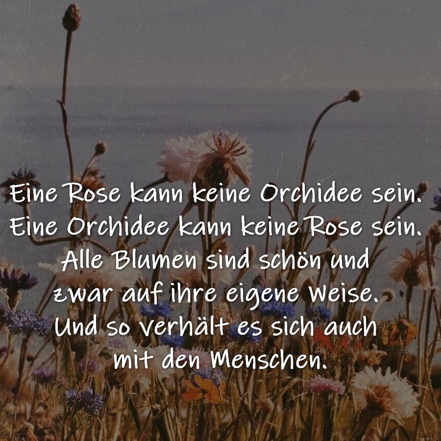 Eine Rose kann keine Orchidee sein. Eine Orchidee kann keine Rose sein. Alle Blumen sind schön und zwar auf ihre eigene Weise. Und so verhält es sich auch mit den Menschen.