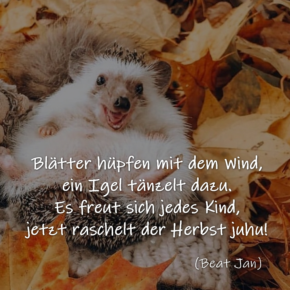 Blätter hüpfen mit dem Wind, ein Igel tänzelt dazu. Es freut sich jedes Kind, jetzt raschelt der Herbst juhu! (Beat Jan)