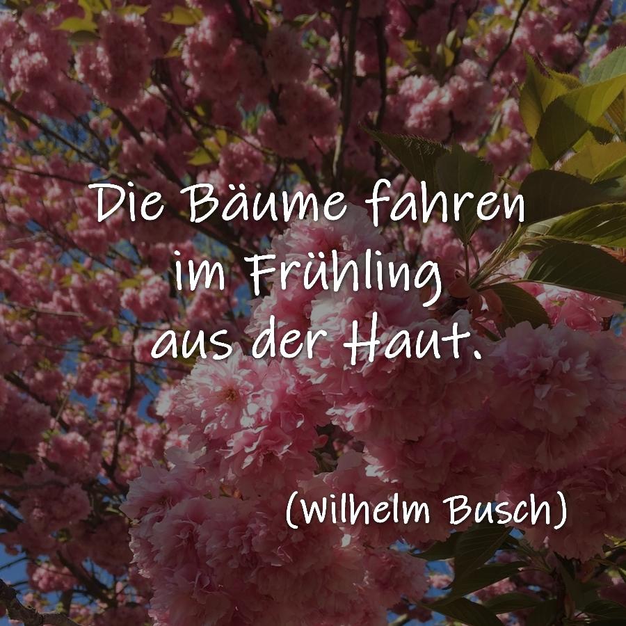 Die Bäume fahren im Frühling aus der Haut.  Wilhelm Busch