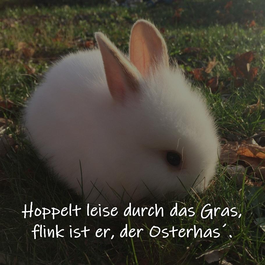 Kurzes Osterdeicht Hoppelt leise durch das Gras,  flink ist er, der Osterhas´. (Autor unbekannt)