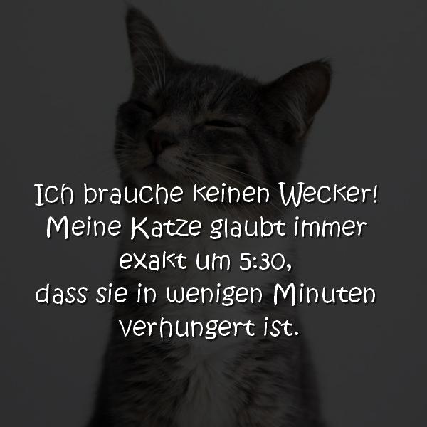 Katzen Wecker Spruch Ich brauche keinen Wecker! Meine Katze glaubt immer exakt um 5:30, dass sie in wenigen Minuten verhungert ist.
